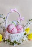 Rosa easter ägg i den vita korgen med körsbärsröda blommor Royaltyfria Foton