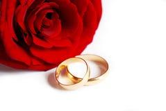 Rosa ed anelli Fotografia Stock