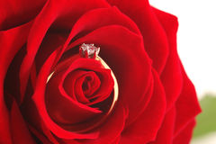 Rosa ed anello Fotografia Stock