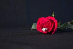 Rosa ed anello rossi Immagini Stock