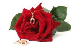 Rosa ed oro Immagine Stock