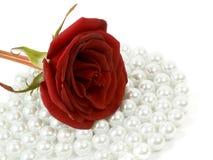 Rosa em grânulos Imagens de Stock Royalty Free