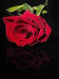 Rosa em um fundo preto Fotografia de Stock Royalty Free
