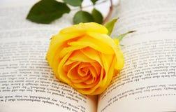 Rosa em um livro Imagem de Stock