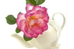Rosa em um Teapot Fotografia de Stock