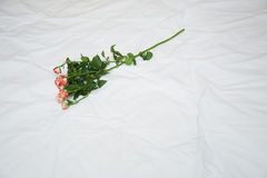 Rosa em uma cama Foto de Stock Royalty Free