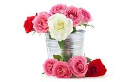 Rosa em uma cubeta do estanho Imagem de Stock