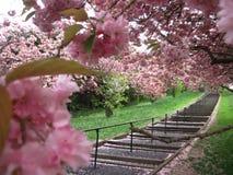 Rosa en parque Imagenes de archivo