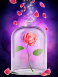 Rosa encantado Imagens de Stock Royalty Free