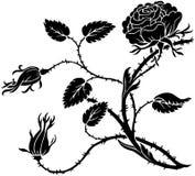 Rosa espinhosa Fotografia de Stock Royalty Free