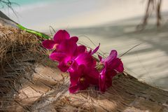 Rosa exotiska frangipanys blommor på en palmträdcloseup på stranden av den tropiska ön arkivfoto