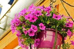 Rosa färg- eller lilablommor Arkivfoton