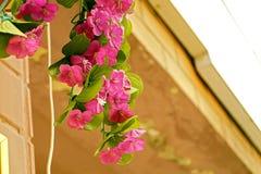 Rosa färg- eller lilablommor Royaltyfria Foton
