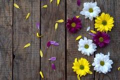 Rosa färg-, guling- och vitkamomillblommor gränsar Dag för födelsedag-, moder` s, kort för dag, för mars 8, för bröllop för valen Fotografering för Bildbyråer