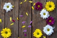 Rosa färg-, guling- och vitkamomillblommor gränsar Dag för födelsedag-, moder` s, kort för dag, för mars 8, för bröllop för valen Royaltyfri Bild