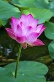 Rosa färg- och gräsplansidor Royaltyfri Foto