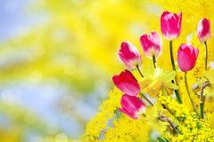Rosa färg- och gulingblommor Arkivfoto