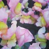 Rosa färg- och gulingblommor royaltyfria foton