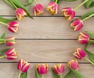 Rosa färg- och gulingtulpan Arkivbilder