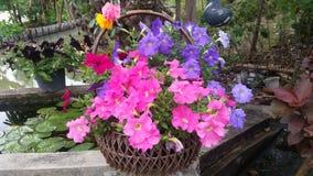 Rosa färg- och violetblomma Royaltyfri Foto