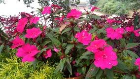 Rosa färgad grupp av blommor royaltyfri bild