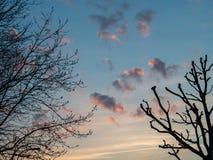 Rosa f?rgade moln p? solnedg?ngen med silhouetted tr?d royaltyfri foto