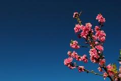 Rosa färgblomma. Arkivfoton