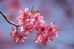 Rosa färgblomma. Arkivbilder