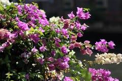 Rosa färgblomma Arkivfoto