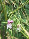 Rosa färgblomma & gräsplanblad Arkivfoto