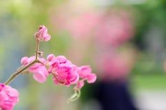 Rosa färgblomma i en suddig bakgrund Fotografering för Bildbyråer