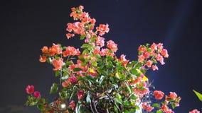 Rosa färgblomma i nattetid royaltyfri bild