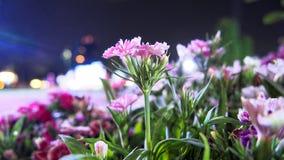 Rosa färgblomma i nattetid royaltyfri foto