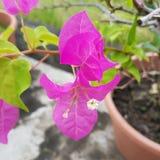 Rosa färgblomma i parkera Arkivfoton