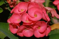 Rosa färgblomma i trädgård royaltyfri bild