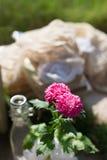 Rosa färgblomma i vasen Arkivfoton
