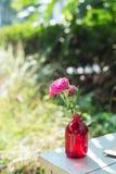 Rosa färgblomma i vasen Arkivbilder