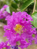 Rosa färgblomma med blured bakgrund Arkivfoto