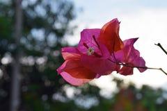 Rosa färgblomma med bokehbakgrund royaltyfri bild