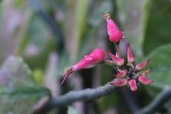 Rosa färgblomma med dagg Arkivbilder