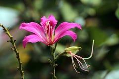 Rosa färgblomma med suddighetsbakgrund Arkivbilder