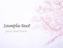 Rosa färgblomma och text Fotografering för Bildbyråer