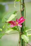 Rosa färgblomma på en metallstång Royaltyfri Foto