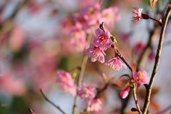 Rosa färgblommablomning Arkivfoto