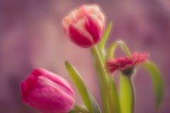 Rosa färgblommaboquet royaltyfria foton