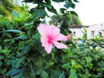 Rosa färgblomman parkerar in morgontid arkivbilder