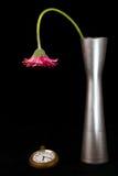 Rosa färg blommar se klockan Royaltyfria Foton