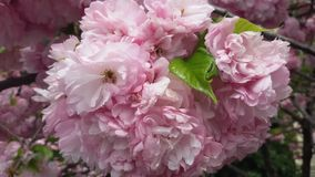 Rosa färgblommaträdgård Royaltyfri Bild