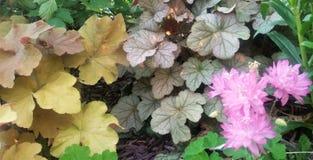 Rosa färgblommor med guling- och lilajordräkningen i trädgårds- säng Royaltyfri Bild