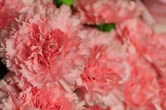 Rosa färgblommorna Arkivbild